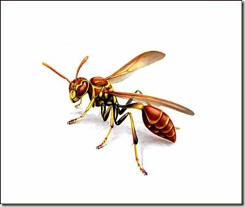 paper wasp sm