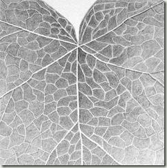 johns leaf