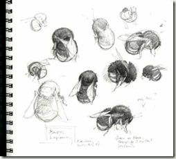 lap sketch sm