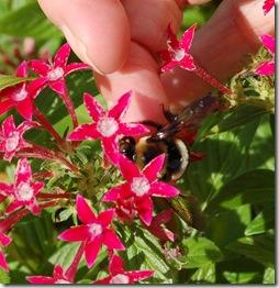 bee help