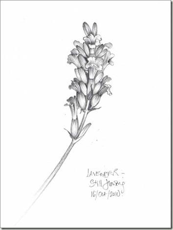 lav flower sm