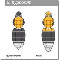 b hyp
