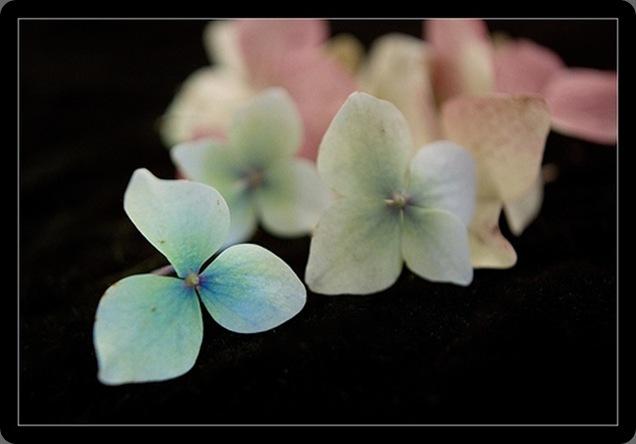 tumblr_kys7y90d9W1qb3edao1_500 pretty little flower