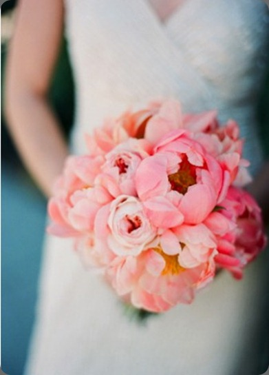 coral-peonies-337x456 gia canali photo
