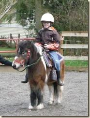 Horses 058