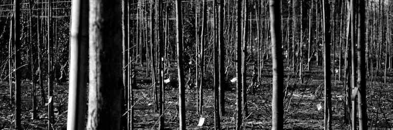 Photo de troncs d'arbres