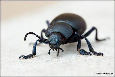photographie de scarabée sur un muret