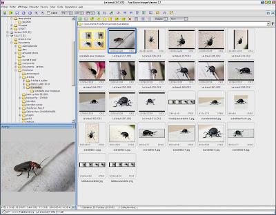 faststone imageviewer.jpg