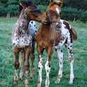 Baby Horses Pictures icon