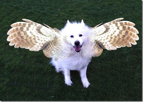 perro con alas extendidas a punto del vuelo