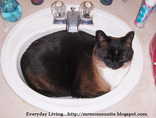 photo of Koko in the bathroom sink