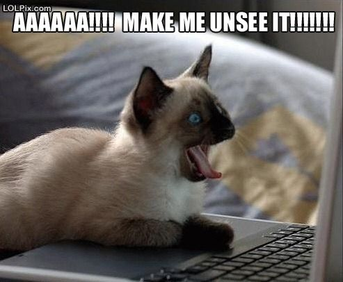photo of a cat yelling at a computer screen