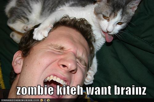 photo of a cat clawing a guy's head