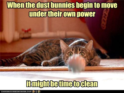 photo of a dust bunny charging a cat