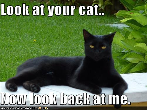 photo of a black cat saying look at your cat now look at me