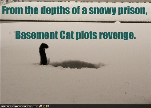 photo of a cat's tail sticking up out of the snow