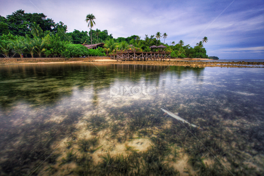 shark on the beach by Asep Dedo - Landscapes Beaches