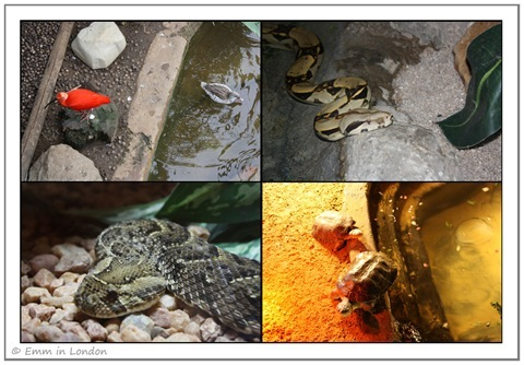 Scarlet Ibis Snakes and Terrapins at Emerald Resort Animal World