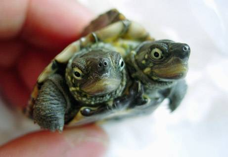 Turtle-Heads