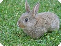 Building a Rabbit Proof Fence | Garden Fences
