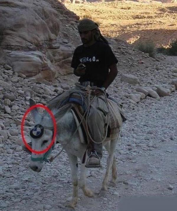 Photos that need no words to laugh - Donkey with BMW logo