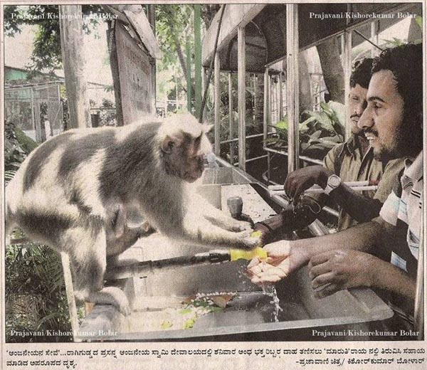 Humanly act by a monkey [Humans can learn from this ape]