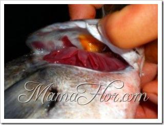1710677-Esto-si-que-es-pescado-fresco-0