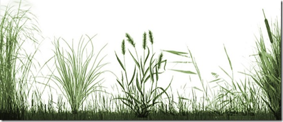 grass_set_brush_preview