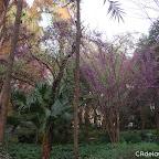 a Parque de María Luisa 12c.jpg