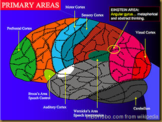 Primary Brain Areas
