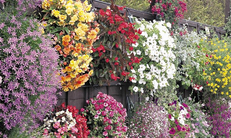 Flowers Garden Pictures Ideas how to add vertical interest to your flower beds containers Flower Garden Ideas Screenshot