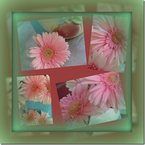 Gerbera collage