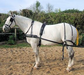 Arden Dexter Classic Wipe Clean BioThane Single Horse  Harness
