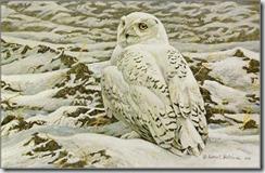 robert-bateman-plowed-field-snowy-owl_4416114