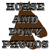 Horse And Pony Photos