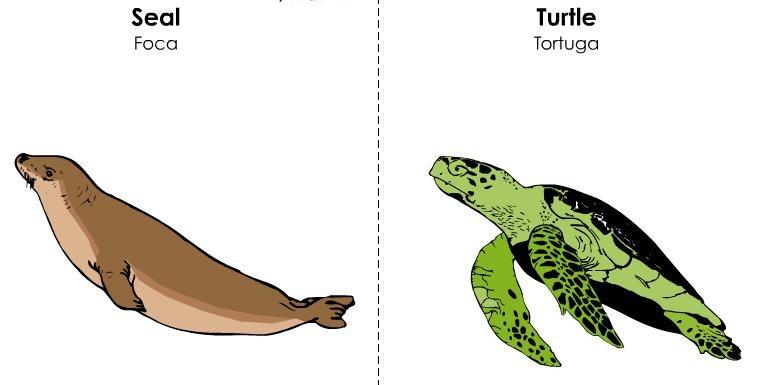 tarjetas ilustradas vocabulario inglés (27)