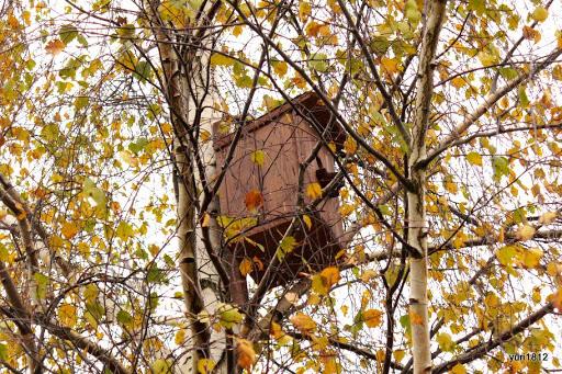 Хутынский Спасо-Преображенский монастырь В Хутыне осень фото yuri1812