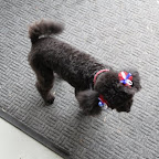 Check out the bows and collar!