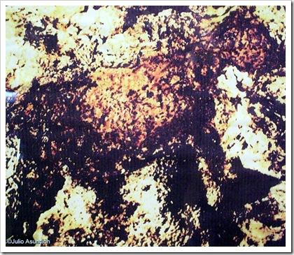Caballo pintado en la cueva de las arañas