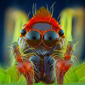 mohawk by Rhonny Dayusasono - Animals Insects & Spiders
