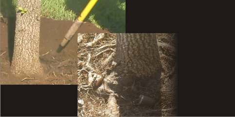 tree roots air spade
