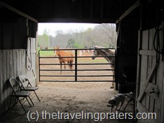 horses looking through gate into barn
