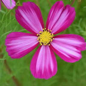 Propeller Flower by Ed Hanson - Flowers Single Flower ( red, yellow, flower )