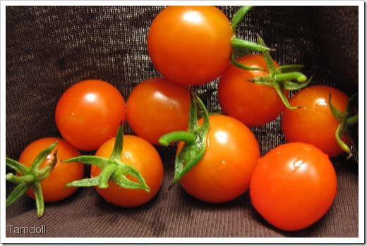 Tamdoll's Tomatoes