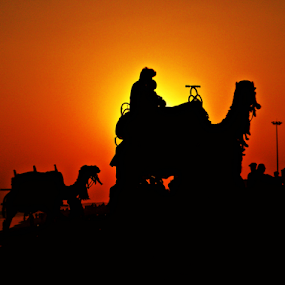 Sunset Silhouette-II by Saptak Banerjee - Landscapes Sunsets & Sunrises ( camel, sky, silhouette, sunset, yellow, sun,  )