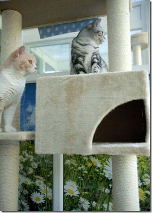 luxury_hotel_for-cats
