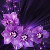 Dream orchid wallpaper