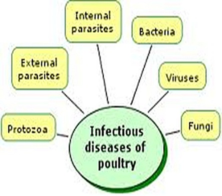 Poultry diseases, causes, symptoms and treatment, with notes
