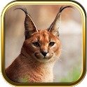 Wild Cats Puzzle Games icon