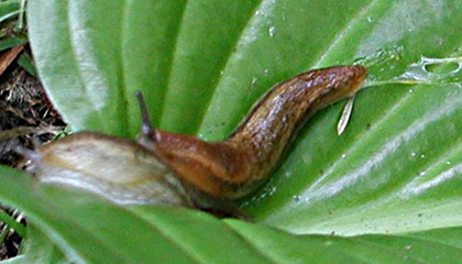HOBBIES GARDENING SLUGS 7/18